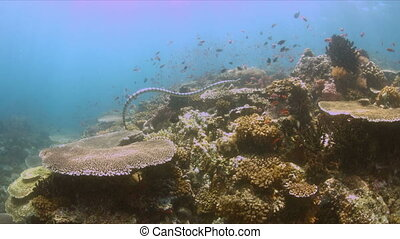 Coral reef with a sea snake and plenty fish 4k - Colorful...