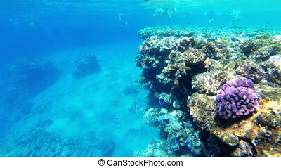 Coral Reef with Colorful Fish Floating in Red Sea near the Coral Reef. Egypt