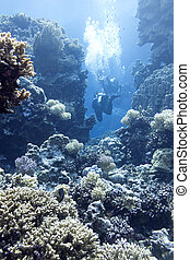 coral reef with divers in tropical sea, underwater