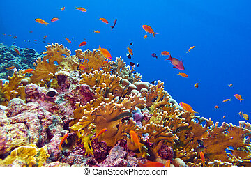 coral reef with fire coral and exotic fishes at the bottom of tropical sea