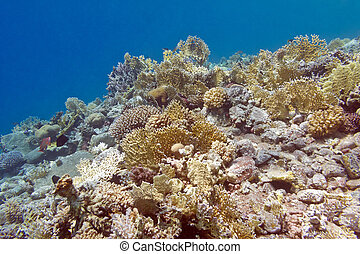 coral reef with fire corals at the bottom of tropical sea, underwater