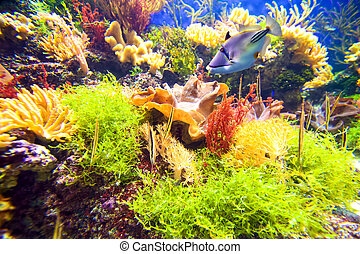 Coral reef with fish