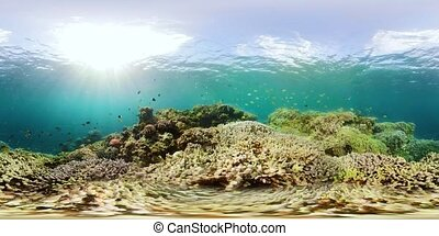 Coral reef with fish underwater 360VR. Camiguin, Philippines...