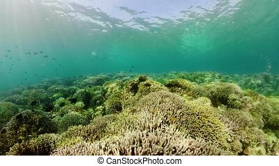 Coral reef with fish underwater. Camiguin, Philippines - The...