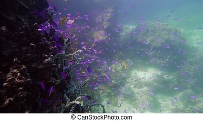 Coral reef with fish underwater. Camiguin, Philippines