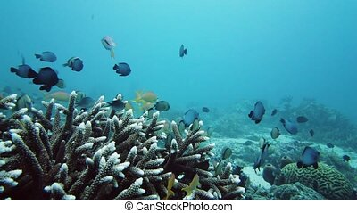 Coral reef with fish underwater. Leyte, Philippines.