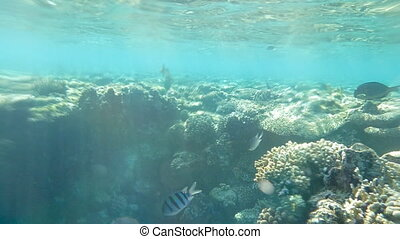 Coral Reef With Fishes And Sunrays