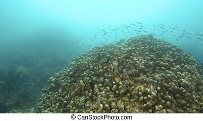 Coral reef with grouped fish underwater
