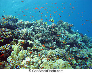 coral reef with hard and fire coral and exotic fishes at the bottom of tropical sea