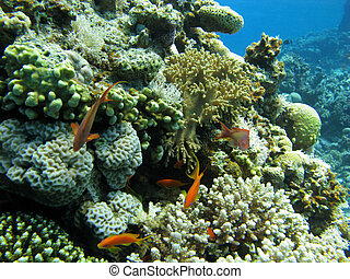 Coral reef with hard and soft corals