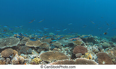 Colorful coral reef with healthy hard corals.