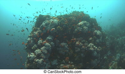 Coral reef with plenty fish 4k - Colorful coral reef with...