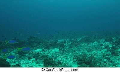 Coral reef with plenty fish. 4k - Coral reef with sandy...