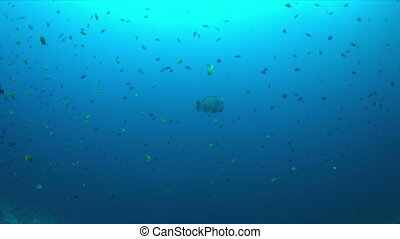 Coral reef with plenty fish 4k