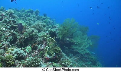 Coral reef with plenty fish and sponge coral. Snapper,...