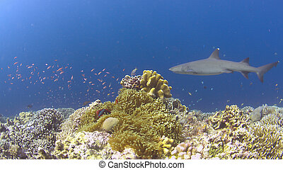 Colorful coral reef with plenty fish
