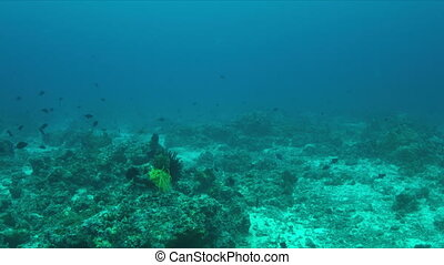Coral reef with plenty fish. - Coral reef with sandy areas...