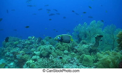 Coral reef with plenty fish