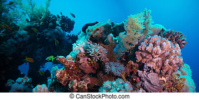 coral reef with violet hard corals poccillopora at the bottom of tropical sea