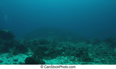 Coral reef with Whitetip Reef Sharks.