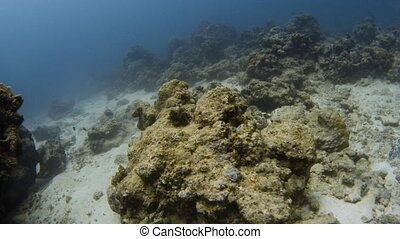 Coral reefs and small fishes on the ocean floor