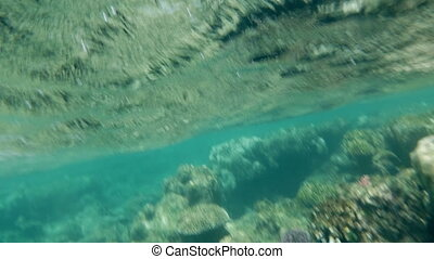 Coral reefs in shallow sea water