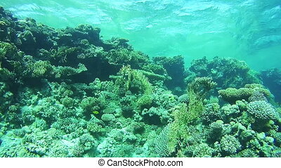 Coral Reefs in the Red Sea, Egypt