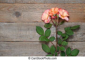 Coral roses on old wooden background top view