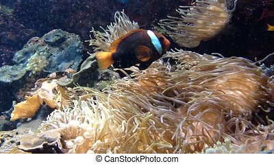 coral runderwater scene with fishes