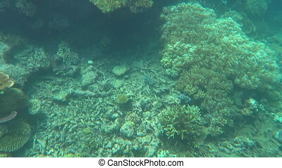 Coral sea Great Barrier Reef - Coral reef marine life in the...