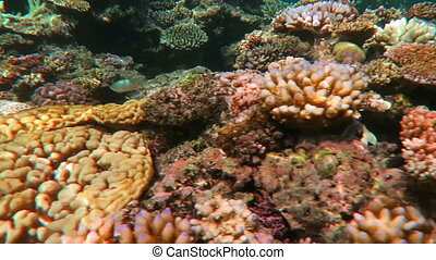 Coral sea Great Barrier Reef