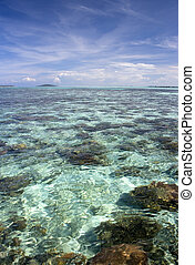 Coral Sea - Image of a shallow open sea full of corals in...