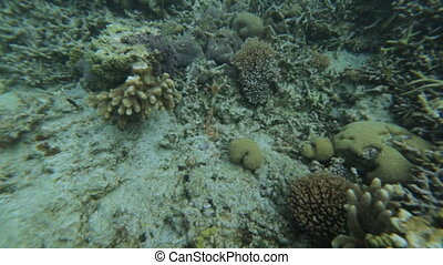 Coral Seabed Fish, GBR, Lady Elliot Island