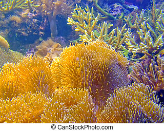 Coral reef gold sponge with green alga