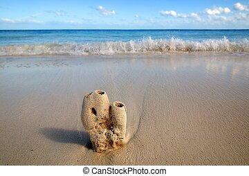 Coral still macro in the caribbean sand, sea shore