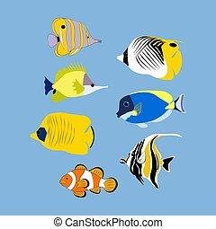 Coral tropic fish