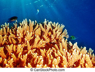 Coral underwater reef of Maldives island