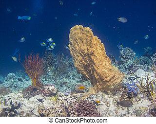 coral, ventilador, amarillo
