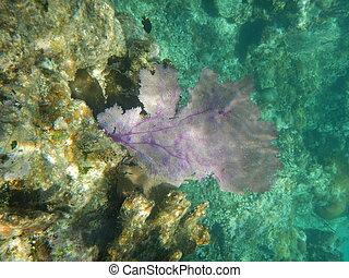 coral, ventilador