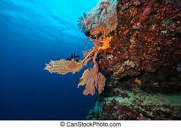 corales, coral, suave, detalle, arrecife