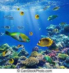 corallo, colonia, e, corallo, fish