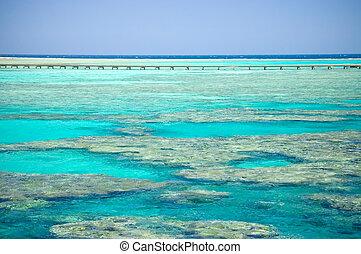 corallo, costa, di, il, mar rosso