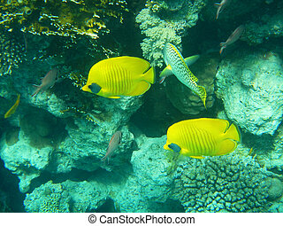Corals and Sponge with Tropical butterfly fish on Colourful...