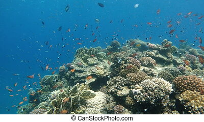 Corals. Corals of the red sea. Egypt. Red sea.
