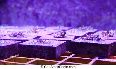 Corals for research - A shot of corals inside an aquarium...