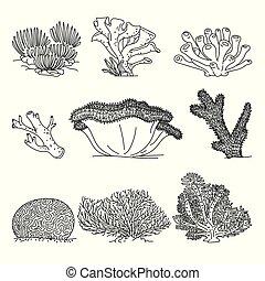 Corals hand drawn vector illustrations