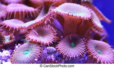 Corals in underwater tropical sea