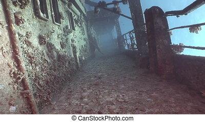 Corals on deck of sunken ship Salem Express underwater in...