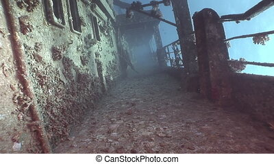 Corals on deck of sunken ship Salem Express underwater in...