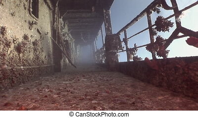Corals on deck of sunken ship wreck Salem Express underwater...